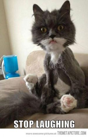 Funny photos funny cat haircut weird