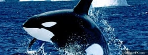 Emerging Killer Whale T1 Facebook Cover