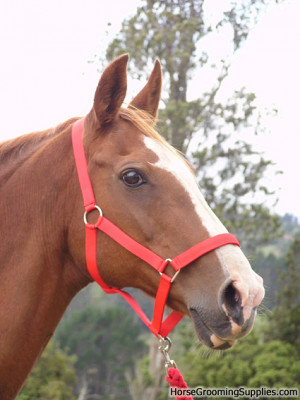 Discuss Best horse photo you have taken.....**New Category** at the ...