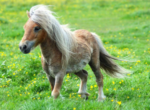 cute pony photos? Below is a gallery comprised of twenty-four cute ...
