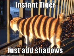 funny-pictures-your-cat-has-tiger-stripes.jpg