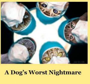 dog's worst nightmare