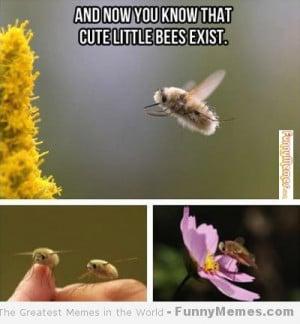 Cute memes – [Cute little bees]