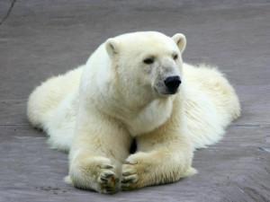 the Funny Bear Wallpapers, Funny Bear Desktop Wallpapers, Funny Bear ...