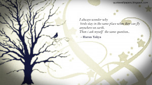 Bird Wallpaper - I always wonder why birds stay in the same place when ...