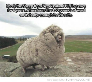 shrek sheep animal hid cave 6 years funny pics pictures pic picture ...