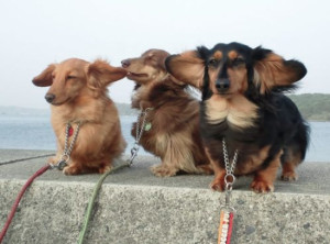 funny-pictures-windy-weather-dogs