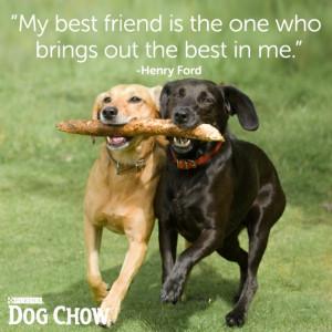 Friend Quote Dog Lover Pics