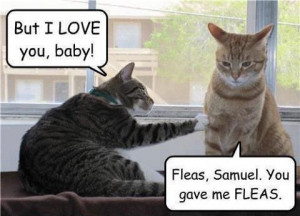 really funny lolcat joke pic Hilarious LOLcat Pic LOL!