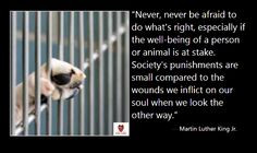animals more animal rescue dogs quotes shelters animal picses quotes ...