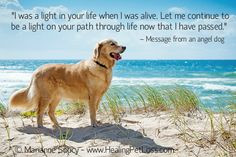 ... when i was not there when my dog died # petloss # animalcommunication