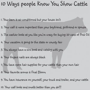 10 ways you know you show cattle