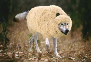Wolf In Sheep's Clothing