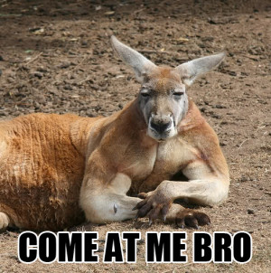 come at me kangaroo