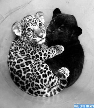 black-and-white-animals-omg-cute-things-072512-06