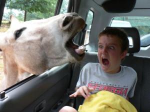 Animales requetegraciosos Parte I [Humor]