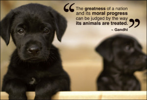 ... pictures: Animal quotes, animal cruelty quotes, animal rights quotes