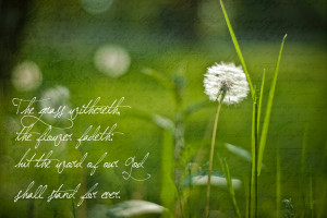 Dandelion Quotes And Sayings