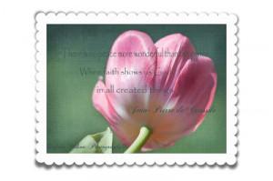 few Tulip Pictures