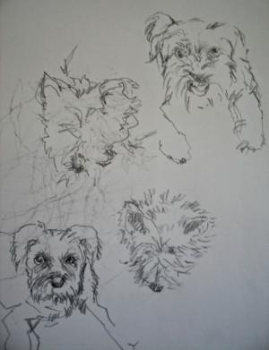 ... landlady s two dogs both white both long haired carol landlady and