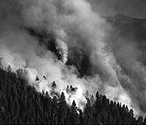 Smoke rising from forest. Courtesy of USDA Forest Service.