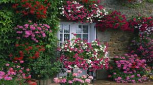 Flower House Summer Garden Landscape Design Facebook Timeline Cover