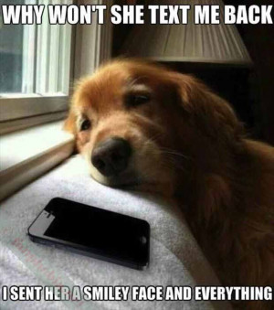 Humor. Funny Pictures. Funny Quotes. Cartoons. Dogs.