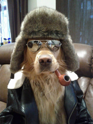 ... December, 2013 Comments Off on 25 Extremely Cool Dogs with Sunglasses