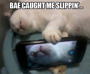 bae caught me slippin lol cat funny meme reddit imgur