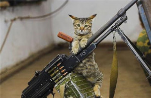 Funny Cat Pictures With Guns And Quotes Funny cat pict.