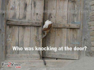 Funny goat pictures (16)