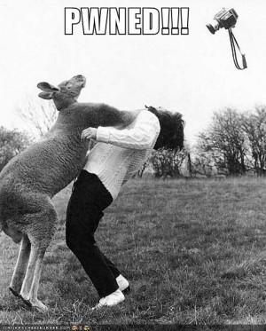 Funny Animal: Kangaroo-punch