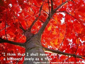 Image the bean trees quotes & the giving tree quotes