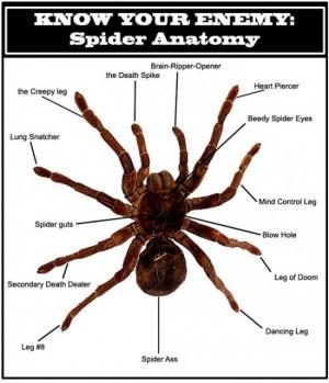 spider anatomy The Anatomy of Spider
