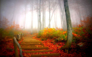 Path through foggy forest during fall. 'The soul that sees beauty ...