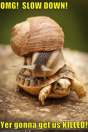 funny-pictures-snail-is-on-turtle-1.jpg