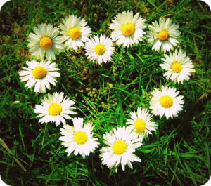 Image of daisies in group w/ a heart shape flowers