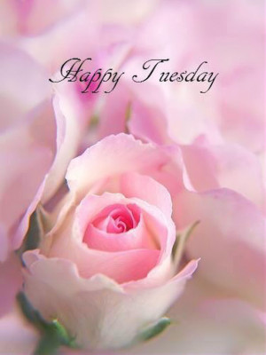 Happy Tuesday Quote With Rose
