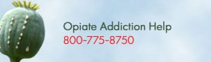 ... of Hydrocodone Mean More Opiate Addicts Will Need Help in 2013