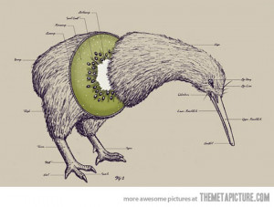 Funny photos funny kiwi fruit bird anatomy