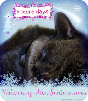 Tag Archives: 9 more days to Christmas-quotes-cats-cute