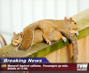 View Full Size | More funny squirrels collide 33k image | Source Link