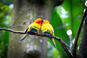 Indian Cute Love Birds Pictures | Love Birds Wallpaper
