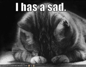 ... blogspot.com/2011/11/cats-have-feelings-signs-that-your-cat.html Like
