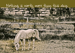 Grey Horse Quote Photograph