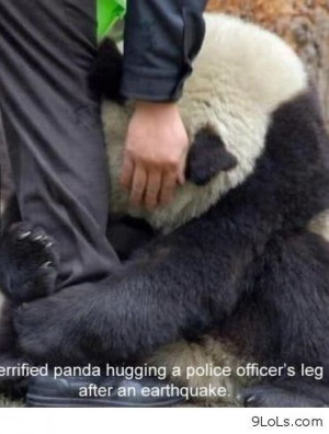 Amazing story with a panda bear - Funny Pictures, Funny Quotes, Funny ...