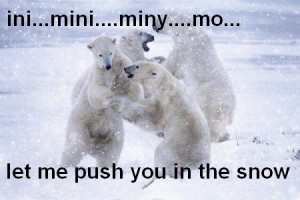 Funny polar bears wrestle Funny Bears Quotes