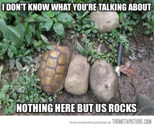 Turtle Funny Pictures Quotes Photos Images Pics