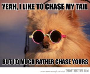 funny cool dog pomeranian sunglasses