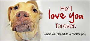 Please Rescue, Foster or Adopt!